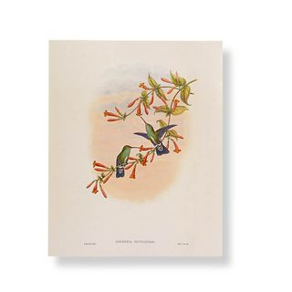 Hummingbird flower print