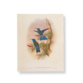 Hummingbird blue 2 print